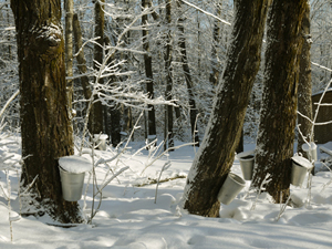 Buckets Hanging in Snowy Forest