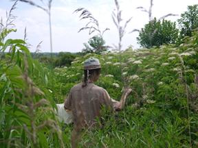 William en train de cueillir des herbes médicinales pendant un atelier sur le sujet.