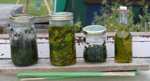 Herbs and Medicinal plants soaking up the sun