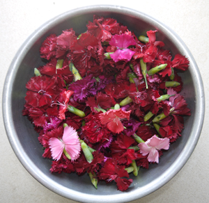 Dianthus in Bowl WEB