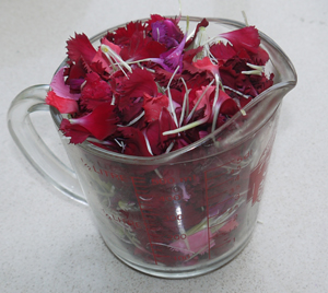 Dianthus in Measuring Cup WEB