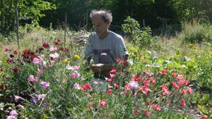 Sylvain Harvesting Dianthus WEB